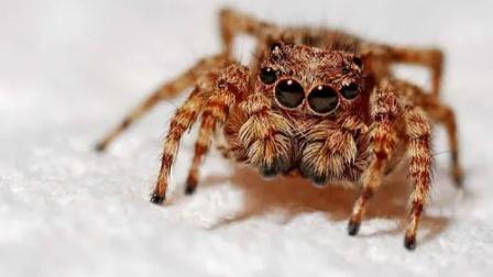 修理工抓到蜘蛛用电钻抽蛛丝,蜘蛛:感觉身体被掏空