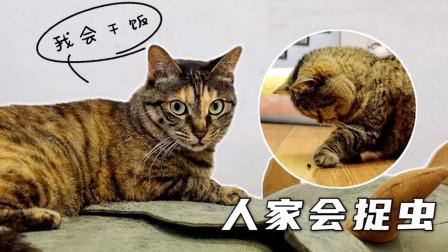 流浪猫被领养后努力适应室内生活,却因不会捉虫惨遭主人嫌弃
