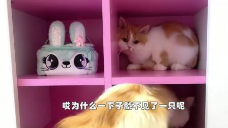 小女孩亲手给小猫咪搭了一个猫爬架,真是太厉害了