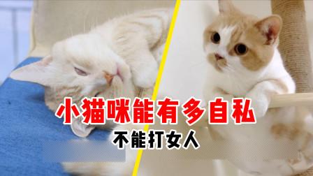 自私的猫咪:不能打媳妇,但是可以打妈妈