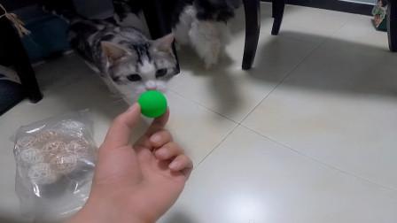给家里三只猫买了100个玩具,猫咪们有点不知所措