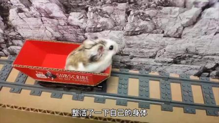 小仓鼠迷宫探险,小梯子成为助攻顺利逃脱