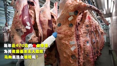 每年近470万匹马被宰杀,为何我国基本无人吃?