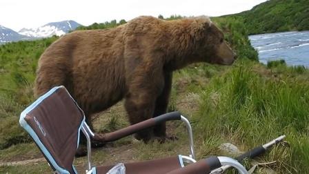 俄罗斯男子野外钓鱼,身后走来一大棕熊,默默的坐在旁边看他钓鱼