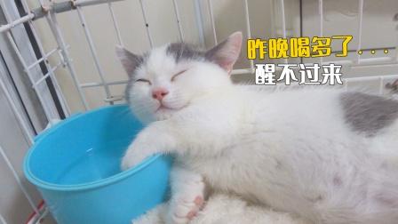 小奶猫睡死了,怎么叫都不醒,直到我拿出秘密武器