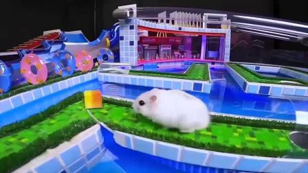 仓鼠挑战极限水上乐园,滑滑梯有趣又刺激