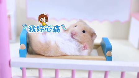 宠物搞笑剧:当代顽固女萌鼠的终极理想生活,你们都憋住别笑