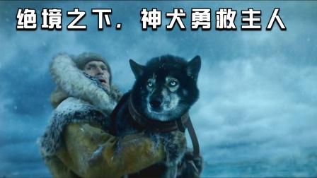 男子本想把狗丢掉,没想到这是只神犬,多次救了他的命!