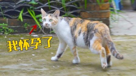 路上被一只怀孕母猫碰瓷了,差点捡回家!