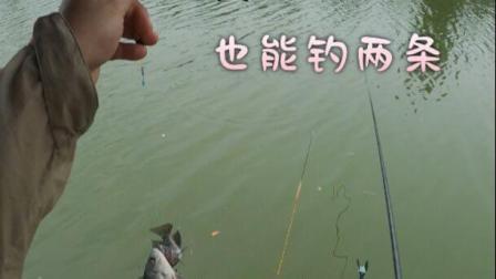 单钩钓两条鱼,你是不是第一次听说
