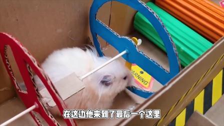 仓鼠挑战新型迷宫,为啥不想继续闯关了
