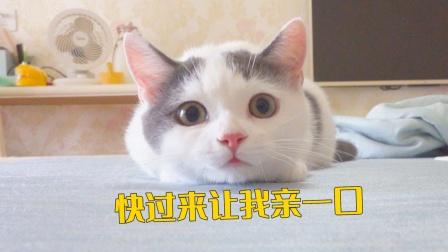 沉浸式吸猫,小奶猫的呼噜声真让人陶醉