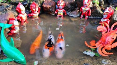 特利迦奥特曼到池塘边抓鱼玩具故事,迪迦奥特曼还抓到了螃蟹