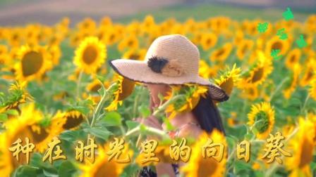 《种在时光里的向日葵》#手机热门#转场特效
