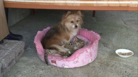 纪录片:一只受伤的猫和狗变成好朋友,每天形影不离谁都离不开谁