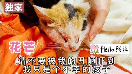 没有双眼前腿也被压断的小奶猫 活着好艰难