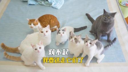 养不起7只猫,我最终决定送走它们