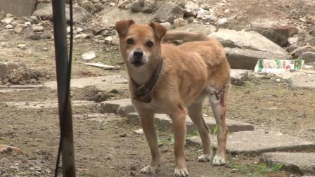 纪录片:一场大火烧塌房屋,主人一死一伤,小狗守在废墟旁几个月