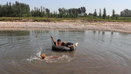小亮坐在水里轮胎上,测试金毛能否拖动他,没想到金毛真太给力了