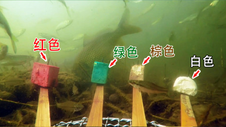 鱼说否是色盲?哪种颜色更诱鱼?用水下相机看一看