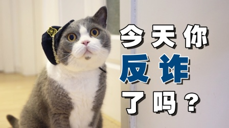 普法宣传,猫猫有责!