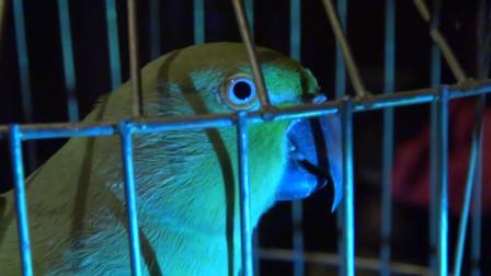 纪录片:一只鹦鹉目睹了主人被杀的过程,帮助警察成功抓到了凶手
