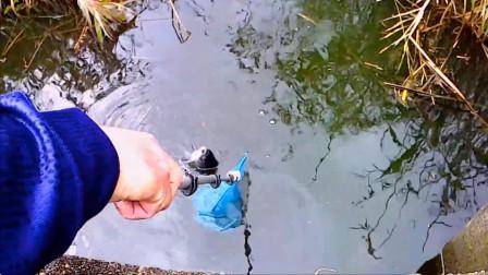 钓鱼:小水沟里有大鲫鱼,要用抄网