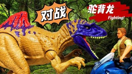 对战火焰驼峰驼背龙!侏罗纪世界恐龙霸王龙奥特曼工程车玩具开箱