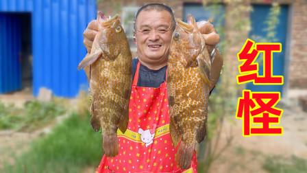 """1700买3条""""红怪"""",号称石斑鱼中的贵族,鱼肉异常鲜嫩,名不虚传"""