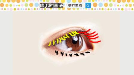 漂亮睫毛的画法,怎样用线才能画好睫毛?素描基础睫毛线条练习