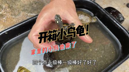 开箱几个小乌龟,乌龟状态特别好,仔细一看才发现有个有瑕疵背甲