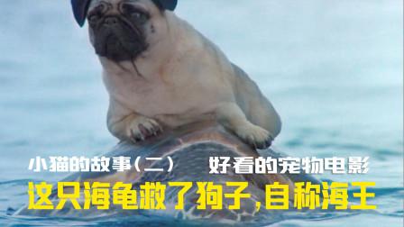 这狗子为了找到好基友,竟然拿海龟当船,不吃饭也得看的宠物电影