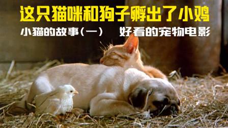 鸡蛋竟然被狗爸猫妈孵化,好看的宠物电影,跨越种族的纯友谊