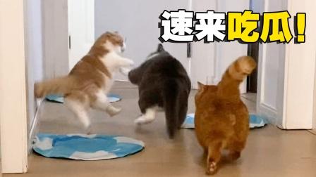 突发事件!多猫家庭现状:一山不容二虎!