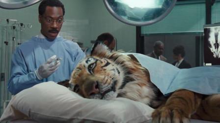 诊所大夫从小就可以和动物说话,老虎竟然主动上门看病!笑懵了
