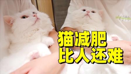 网友给猫咪减肥出损招,猫没瘦人倒快累瘫了