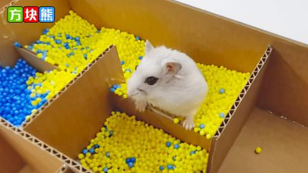 小仓鼠的迷宫历险记,千奇百怪的挑战等待着它