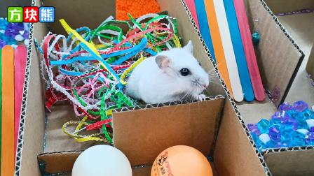 """小仓鼠靠着嗅觉和软骨功勇闯迷宫,实""""鼠""""不易啊"""
