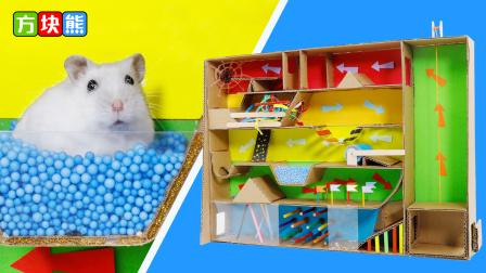 哇,小仓鼠挑战新型迷宫,能否挑战成功呢