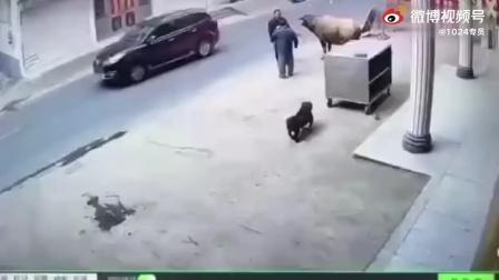 恶狗敢战大水牛,真恶。