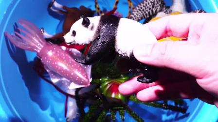 一起认识大熊猫老虎蝙蝠等动物吧