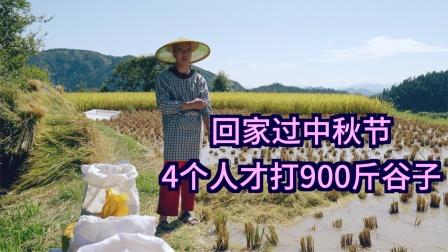 回家过中秋节还要打稻谷,一天才打900斤,你那中秋习俗是怎样