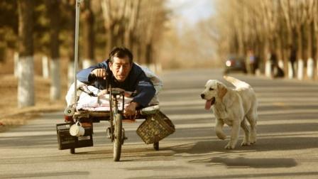 狗狗给残疾人当了十几年车夫,最后4000元贱卖,这电影太好哭