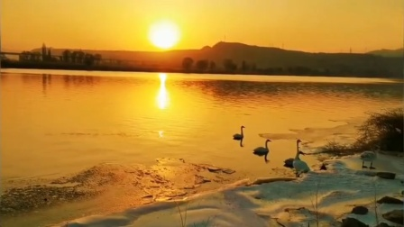 兰州网红天鹅仙子圣池三江口天鹅滩