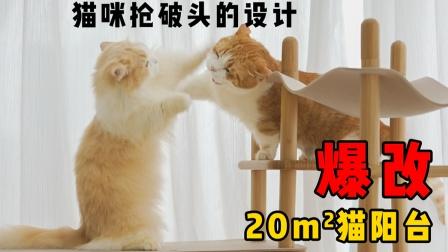爆改20平米猫房阳台,从无猫问津到为地盘大打出手!