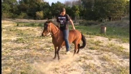 美女疯狂骑小马