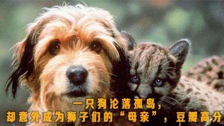 《丛林赤子心-下》狗狗落难荒岛,智斗猎人与恶狼