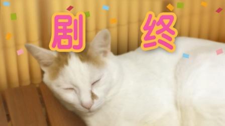 【舍长制造】翌日 猫之怪奇谭 正常+彩蛋