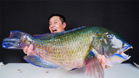 487元买了6斤多青衣鱼,4大鱼王之一,味道果然名不虚传