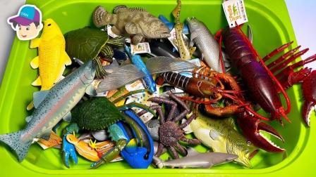 动物海洋世界:超级巨大的大龙虾和大螃蟹简直太神奇了!